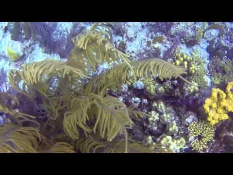 Chief Ministers Dive Site - Grand Turk
