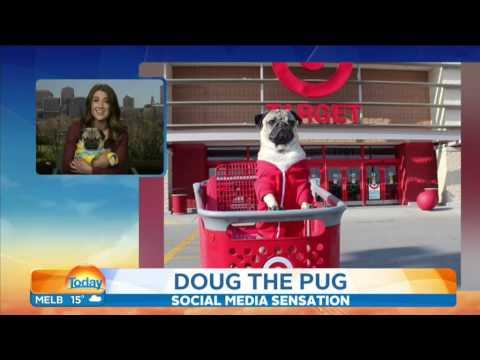 Doug the Pug on the TODAY Show Australia