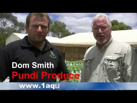 Aquaponics For Profit Commercial System In Australia – Pundi Aquaponic Farm (Part 2)