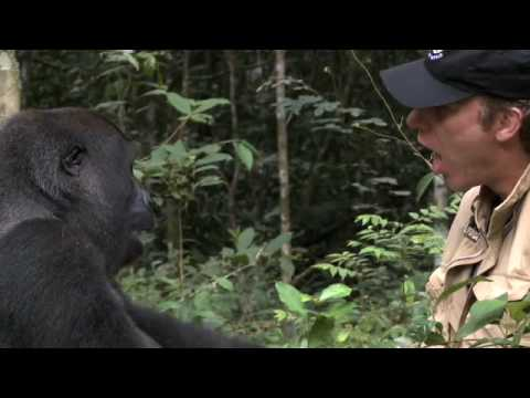 A man raised a gorilla like a son then returned him to the wild. This is their reunion 5 years later