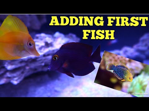 Adding First Fish + Acclimating Tips