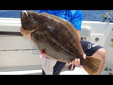 HOT Ocean Fluke (Flounder) Bite Plus Underwater View