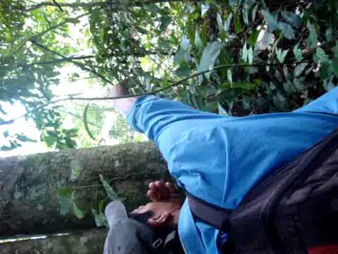 Local Tacana guide in jungles of Madidi National Park, Bolivia