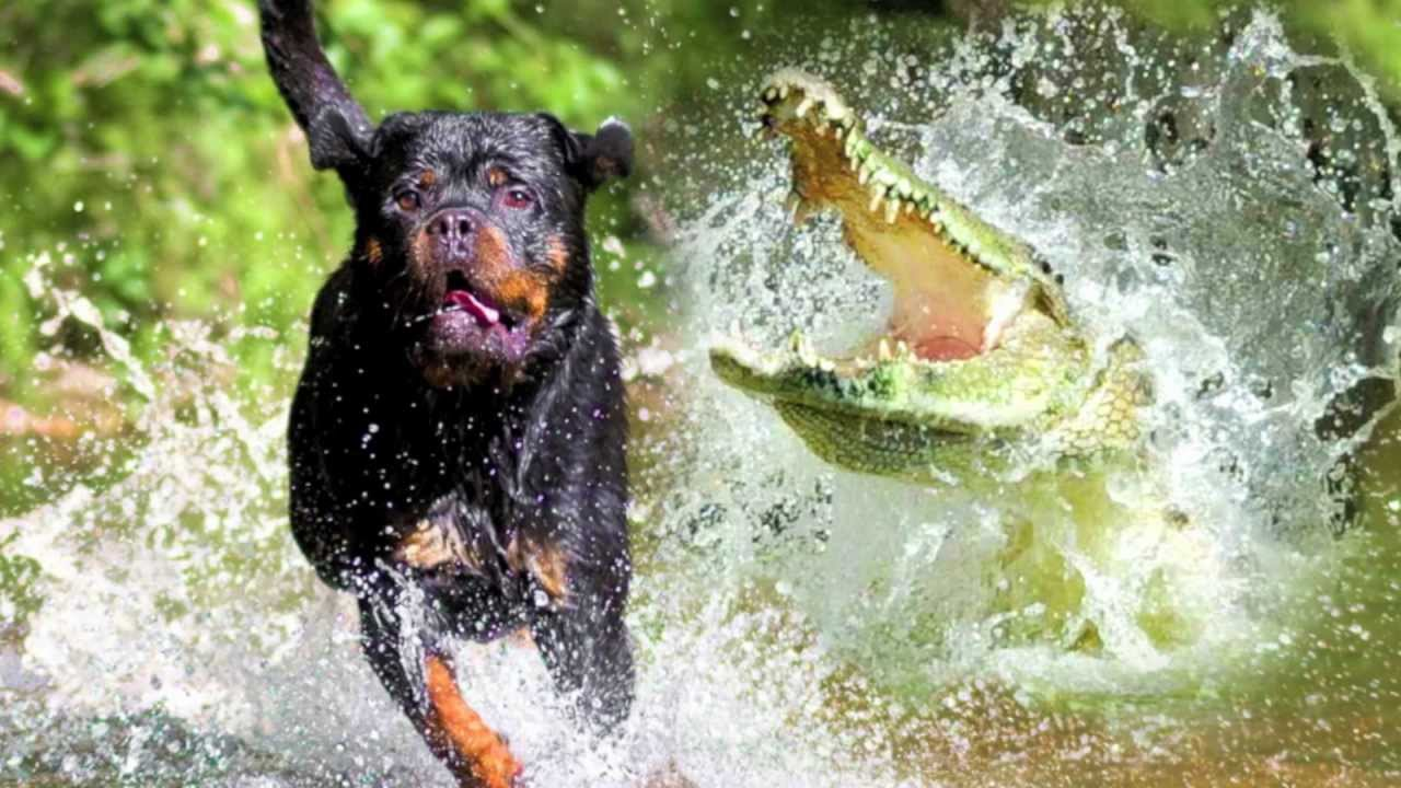 Alligator Gets Dog