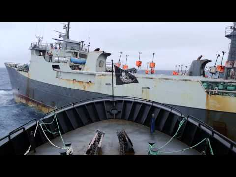 Dramatic Footage of Near Collision In High Seas Battle With Notorious Poaching Vessel