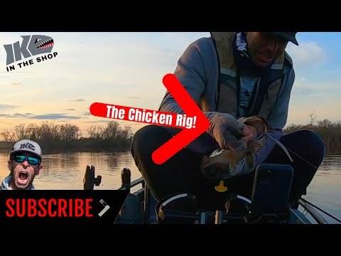 How To Fish The Chicken Rig!!
