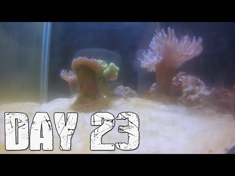 How Fast Does Corals Grow? Day 23 (Algae Growth on the Glass)