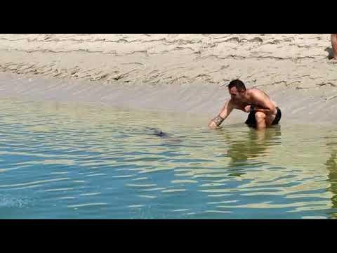Un confiado tiburón causa sensación na ría de Foz
