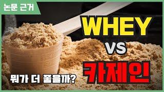 웨이 프로틴 vs 카제인 제대로 알고 드세요!