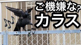 夏到来のお知らせ(2019年) thumbnail