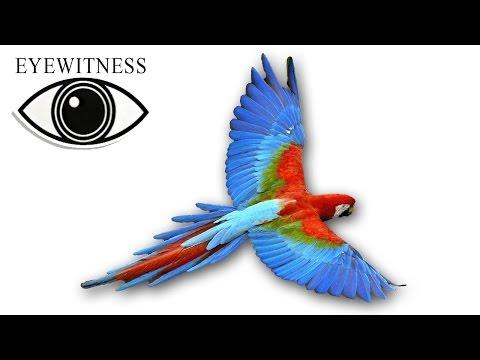 EYEWITNESS | Bird | S1E2