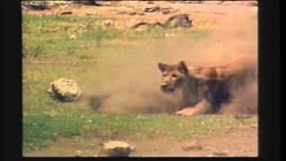 Missing Link Trailer 1988
