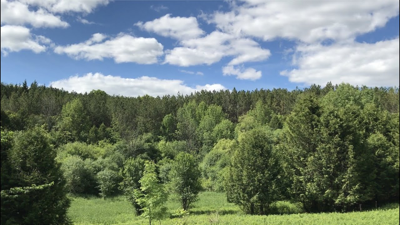 Vlog|01 感受美丽的大自然 之多伦多周边小森林Glen Major Forest