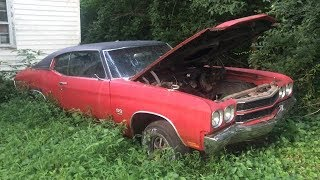 Cats found living in a neglected 1970 SS Chevelle!!!