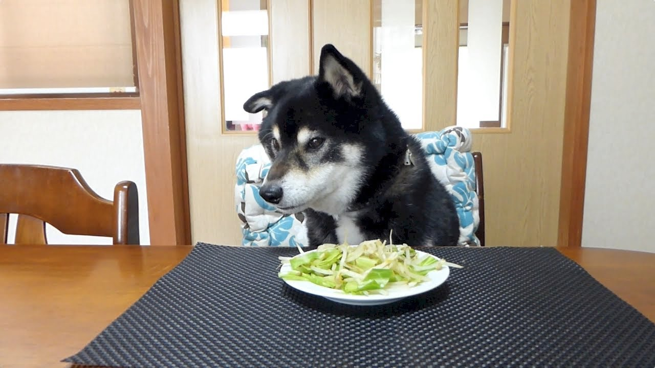 Shiba Inu Food Recipes