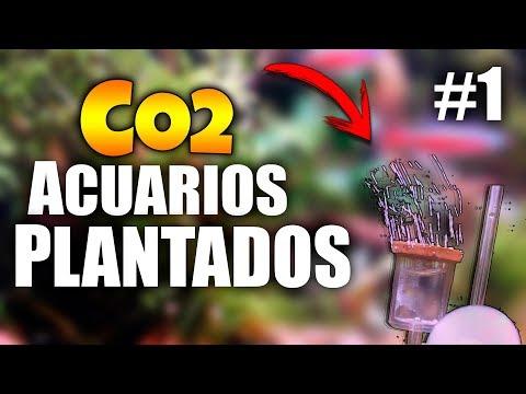 """¿Para qué SIRVE el CO2 en ACUARIOS PLANTADOS? ¿Cuánto tiempo dura? - """"VIDEORESPUESTA #1"""" CO2 CASERO"""
