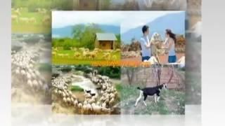 Phan Rang thành phố tuổi xuân  St  Phan Quốc Anh   Tb  Phan Hoài Lâm