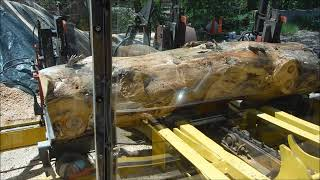 sawing old pine part two