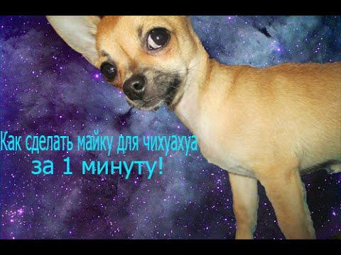 вязаная одежда для маленьких собак своими руками выкройки