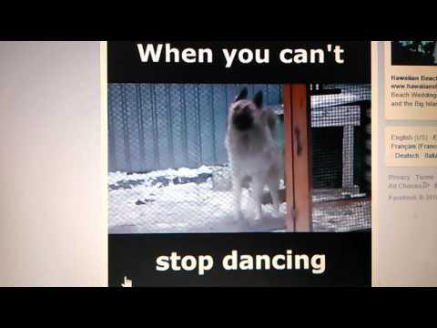 Northern cree war cry dog
