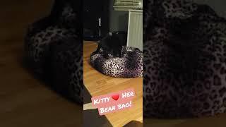 Paris Loves Her Bean Bag - She