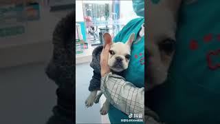 Funny Dog Injection videos    Dog Injection Funny Compilation