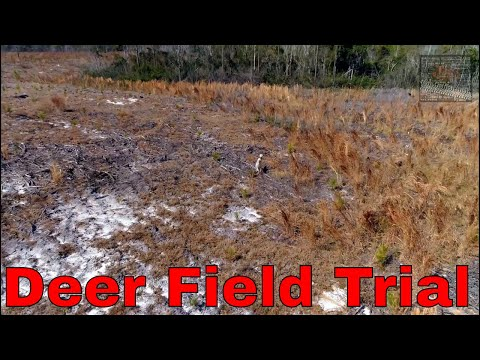 Town Creek Hunting Club Deer Field Trials