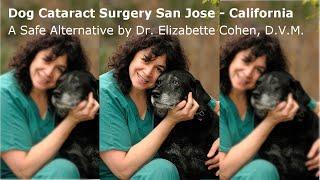 Dog Cataract Surgery San Jose