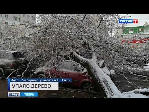 Происшествия в Тверской области сегодня | 7 ноября | Видео