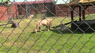 Z kamerą wśród zwierząt, czyli telewizja w ZOO Safari