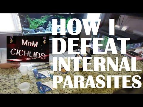 Metroplex! How I Treat Internal Parasites (bloat, Sunken Belly)