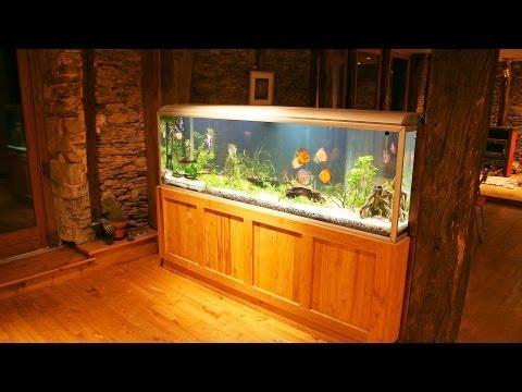 How to Maintain a Big Fish Tank | Aquarium Care