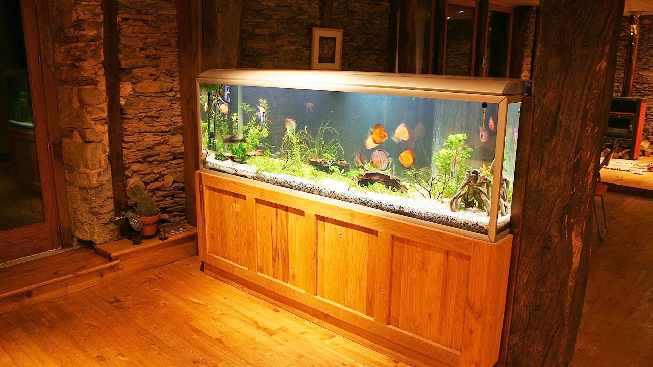 Cool Aquariums For Sale How To Maintain A Big Fish Tank Aquarium Care Youtube