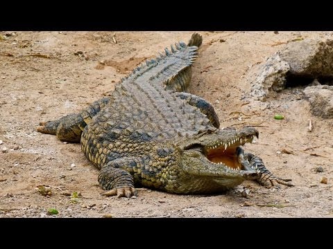 Крокодильи разборки, 2010 NatGeo Wild
