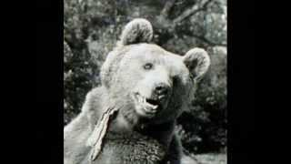 Wojtek the Soldier Bear - WWII