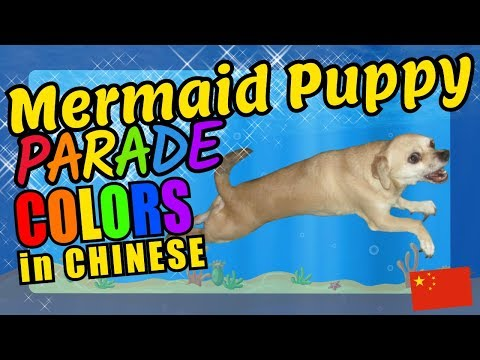 Mermaid Puppy Chinese Language Colors Educational Language Video for Kids
