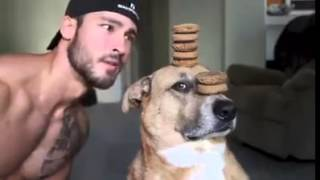 Funny Well Trained Dog