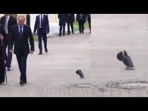 Putin and pigeon