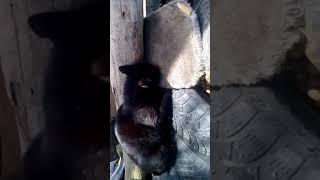 Кот Семён и валерьянка