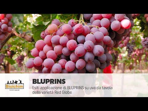 Biolchim spa esiti applicazione bluprins su uva da - Red globe uva da tavola ...
