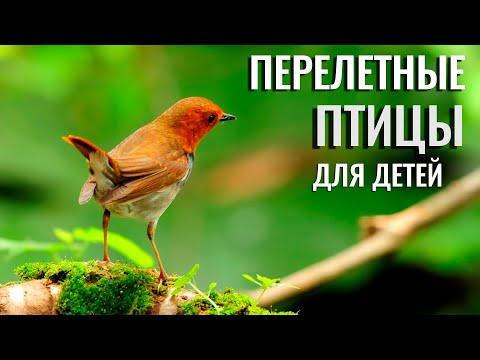 Вопрос: Почему есть перелетные птицы, но нет перебегающих животных?