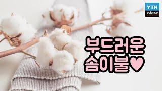 [핫클립] 겨울밤을 따뜻하게 해주는 목화솜 이불 제작과…