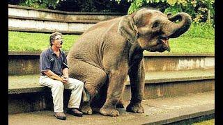 ЛУЧШИЙ СБОРНИК ПРИКОЛОВ СО СЛОНАМИ🐘Я СМЕЯЛСЯ еще ЦЕЛЫЙ ДЕНЬ😂 about elephants