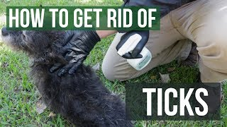 How to Get Rid of Ticks (4 Easy Steps)