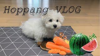 [호빵VLOG] 비숑프리제 | 귀여운 강아지 먹방 | …