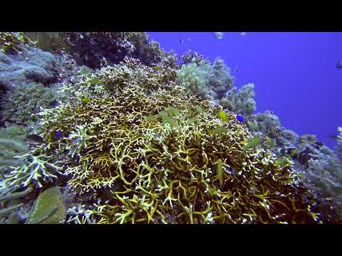 Paul-Ranky-Panglao-Bohol-01-DoljoPoint-PuntodWall-Dives-4Kvideo-Master-Edit-HD