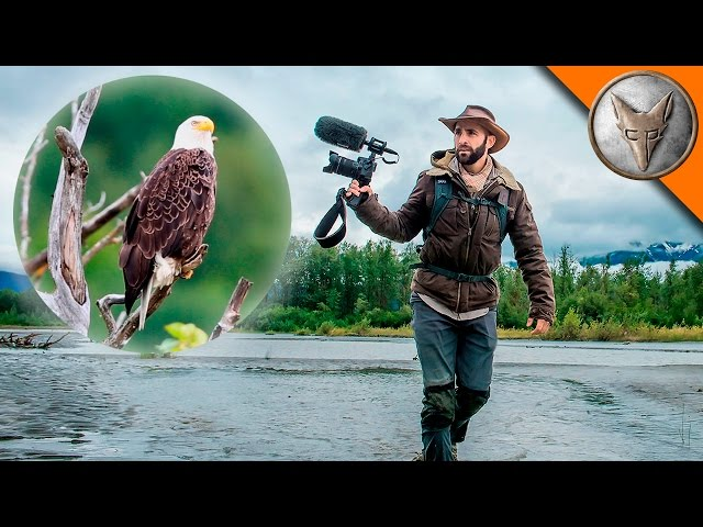 Bald Eagle Adventure!
