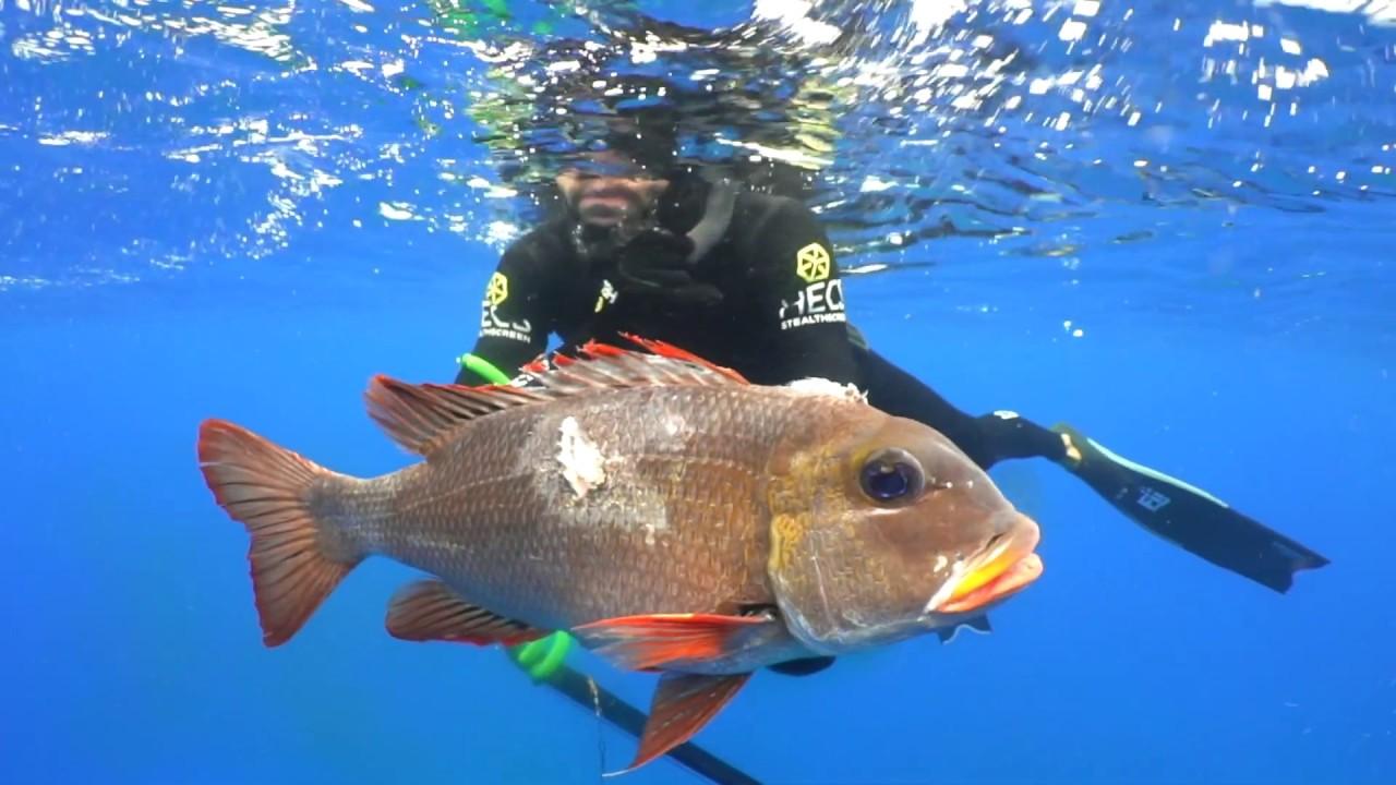 Spear Fishing Kona, Hawaii
