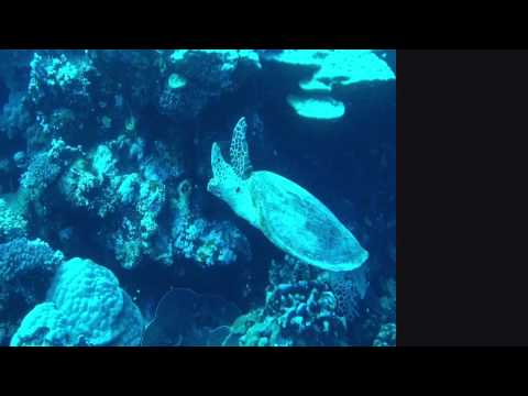 "MV ""Hurricane"" 1st July 2015 southern Red Sea"