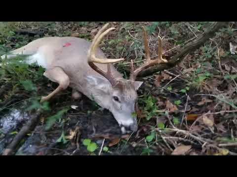 Central Florida Public Land Deer Hunting